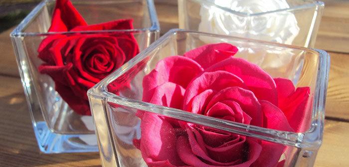 Rose-sous-cloche-en-verre